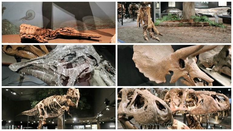 bozeman-museum-of-the-rockies