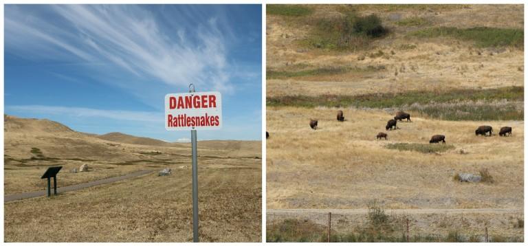 national-bison-range